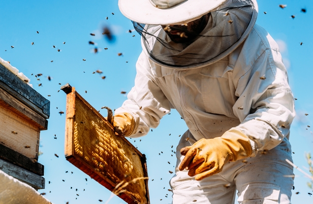 beekeeper collects honey from the hive in Nafplio
