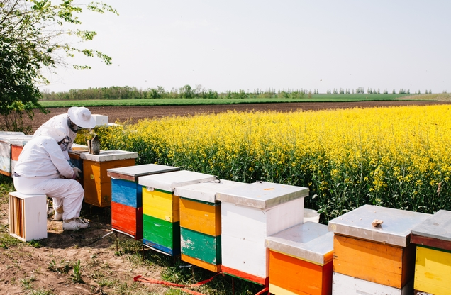 beehives in the countryside of Nafplion