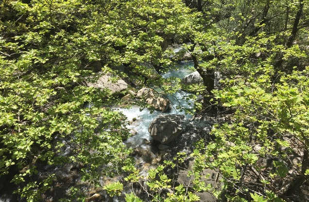 Green trees and The Milaon river