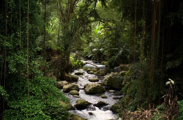the river Neda in the lush vegetation