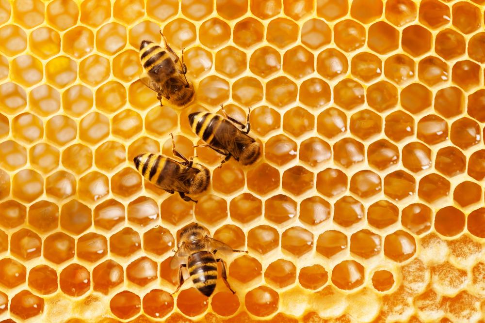 μέλισσες πάνω σε κηρήθρα με μέλι