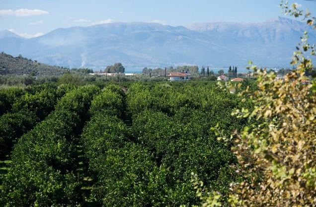 η θέα του βουνού από το αγρόκτημα