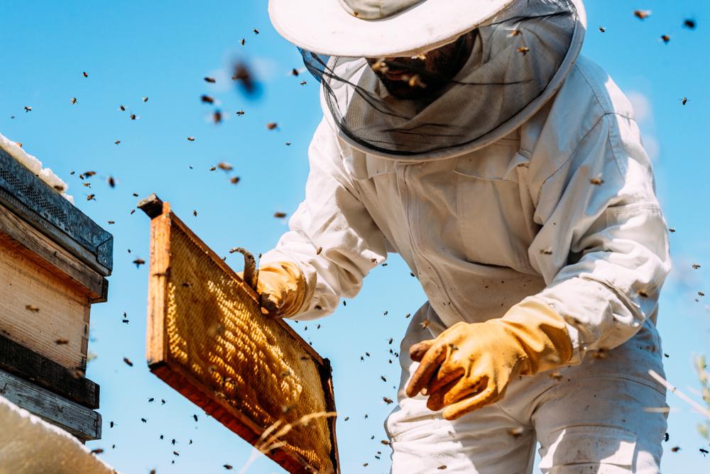 μελισσοκόμος συλλέγει το μέλι από την κυψέλη στο Ναύπλιο