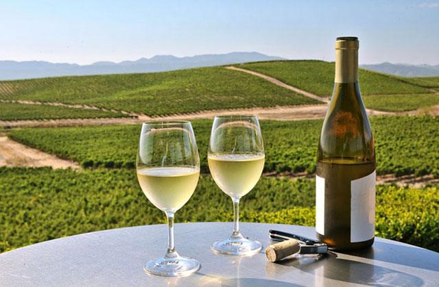 Νεμέα - Γευσιγνωσία κρασιών από Ναύπλιο: Ποτήρια με λευκό κρασί με θέα τα αμπέλια της Νεμέας