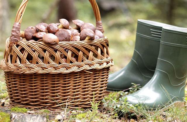 Κυνήγι Μανιταριών: κυνήγι μανιταριών, ψάθινο καλάθι γεμάτο με φρέσκα μανιτάρια