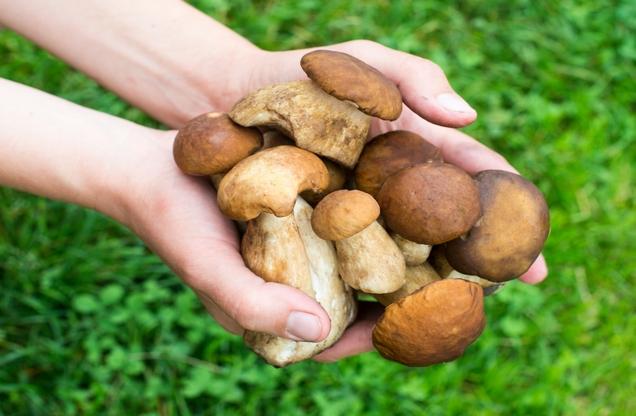 χέρια που κρατάνε φρέσκα μανιτάρια σε κυνήγι μανιταριών στο Ναύπλιο