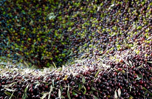 σωρός από μαύρες και πράσινες ελιές