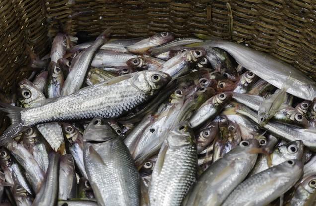 μαζεμένα ψάρια σε ψάθινο καλάθι