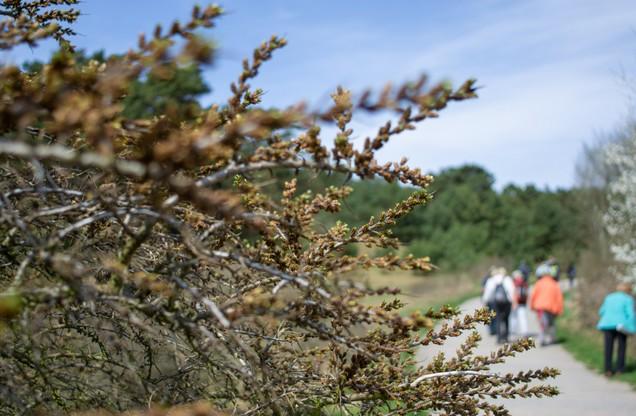 κλαδιά δέντρου με πεζοπόρους στο βάθος