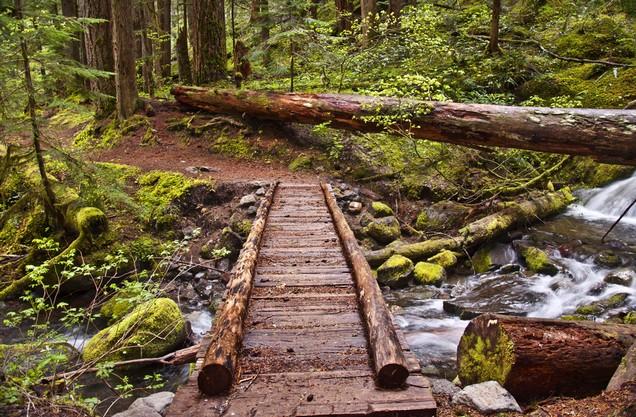 ξύλινη γέφυρα πάνω από ρυάκι